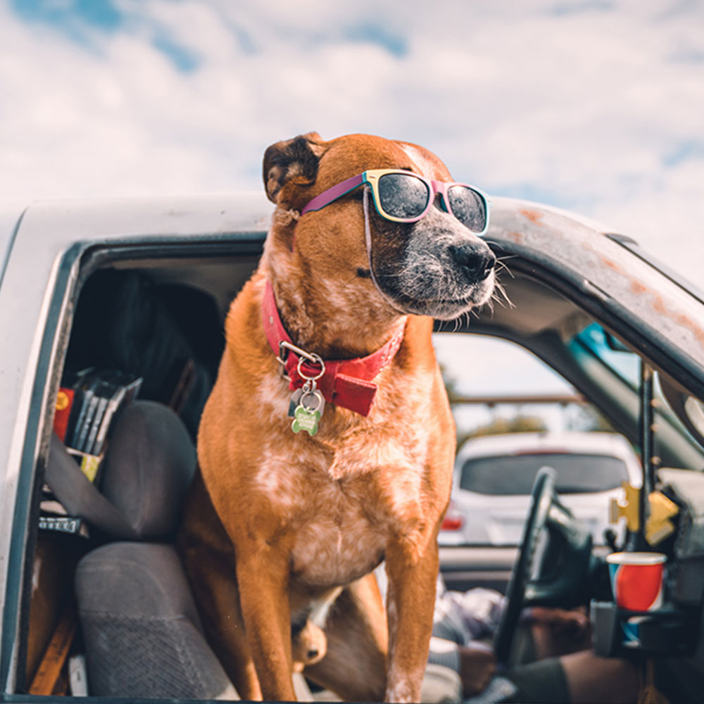 Σκύλος κι αυτοκίνητο πάνεμαζί!